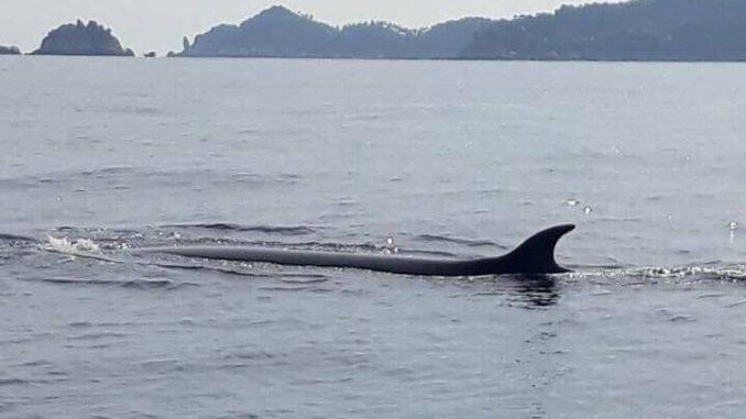 koh-tao-baleine1-678x381.jpg